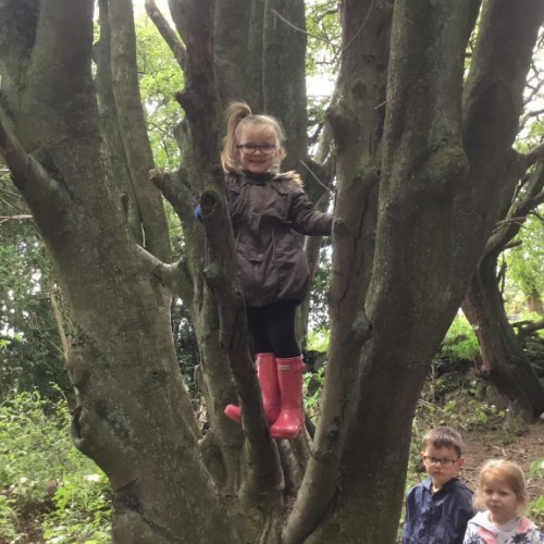 Forest school (4)